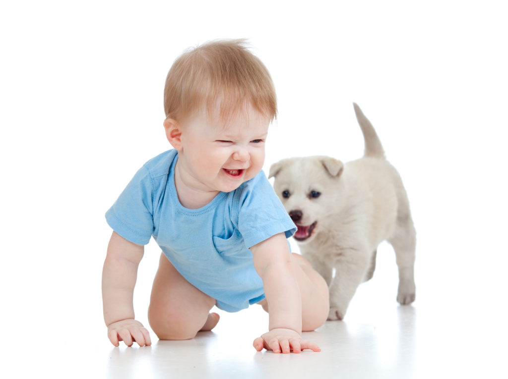 Dog training with babies in norman and moore oklahoma